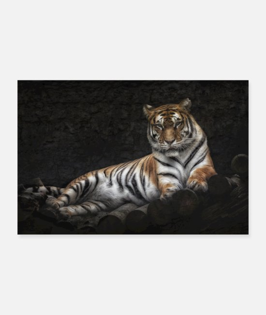 Fur Posters - tiger - Posters white