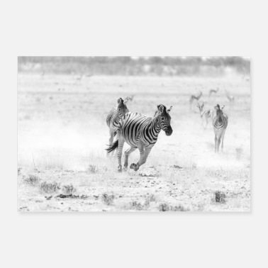 Black and white zebra - wild zebra - Poster