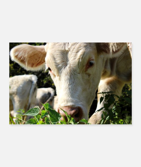 Boss Posters - Cow cows farming farmer gift funny - Posters white