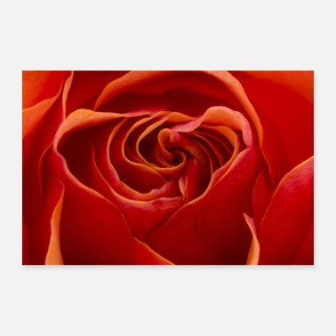 Macro Vivid Orange Red Rose, Macro Photography, Close Up - Poster