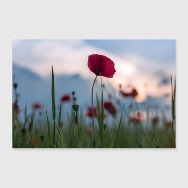 Poppies field - 30x20 cm Poster