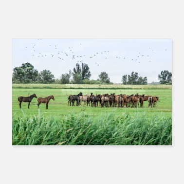 Mobile Horses in the meadow - 30x20 cm Poster