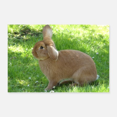 Hase Hase - Poster 30x20 cm