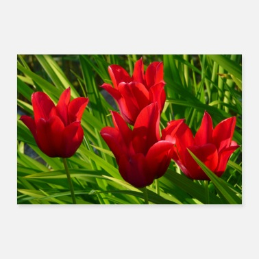 Index.php Four red tulips on a green meadow - 30x20 cm Poster