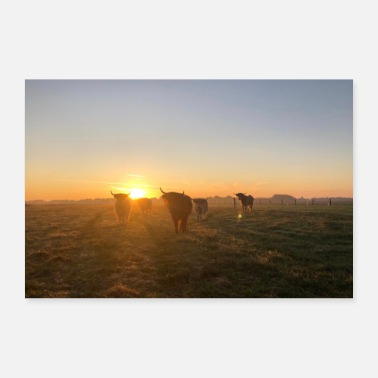Highland Highland cattle - Poster