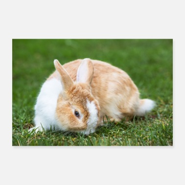Beautiful blue-eyed bunny in the grass - Poster