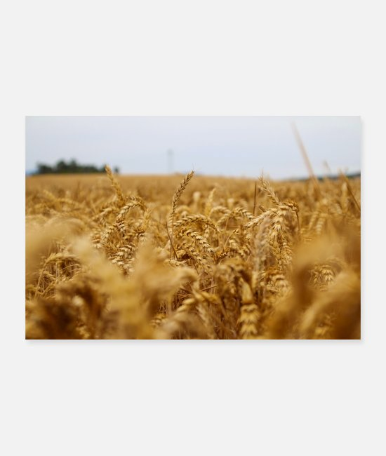Crop Posters - wheat field - Posters white