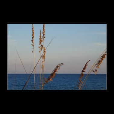 Reeds and sea - 30x20 cm Poster