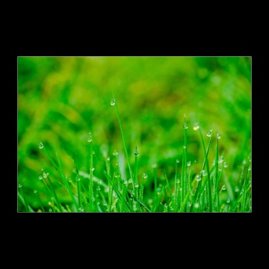 Green meadow with morning dew poster - 30x20 cm Poster