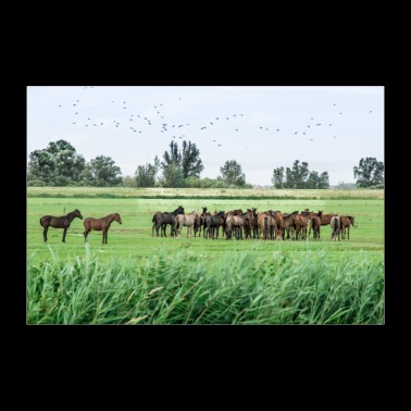 Horses in the meadow - 30x20 cm Poster