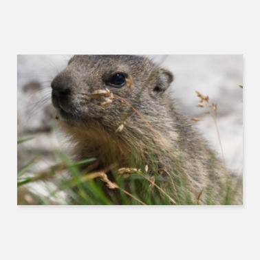 Meteorologist Cute Groundhog Animal Woodchuck Nature Alps Nature - Poster