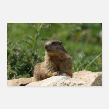 Meteorologist Mother Earth Environmental Woodchuck Picture Photo - Poster