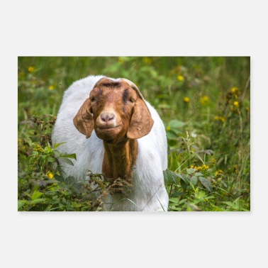 Animal summer goat - Poster 24 x 16 (60x40 cm)