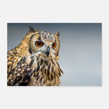 Long Long Eared Owl - Poster