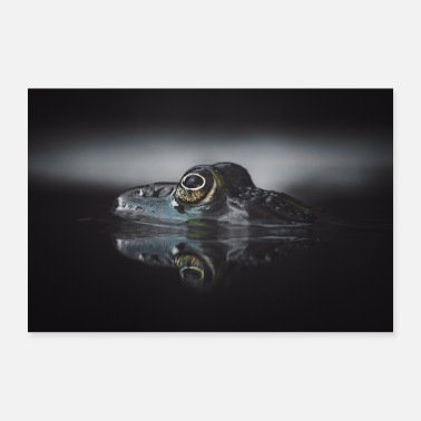 Water Frog in the water - Poster