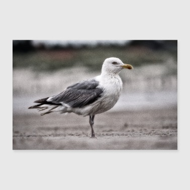 Tempest Wet seagull on the beach - Poster 24 x 16 (60x40 cm)