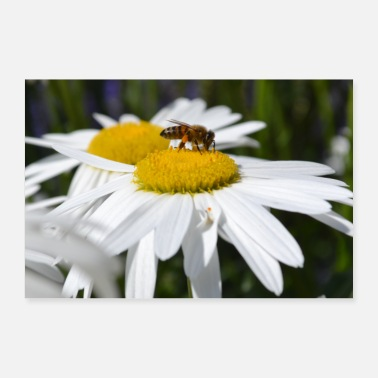 Snel Bee trifts bloem - Poster 60x40 cm