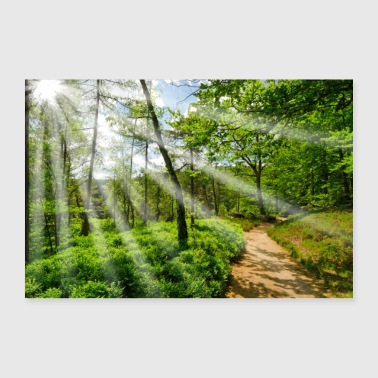 Spring Break Forest path Nature in the sunshine Poster - Poster 24 x 16 (60x40 cm)