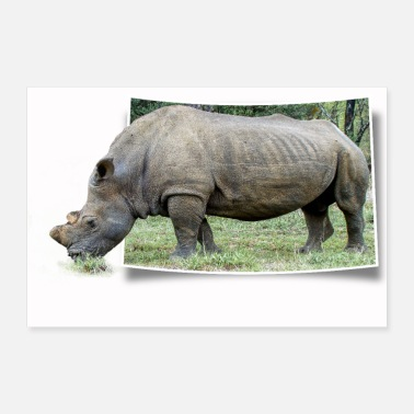 Grass Rhino looks out of a photo and eats grass - Poster 24 x 16 (60x40 cm)