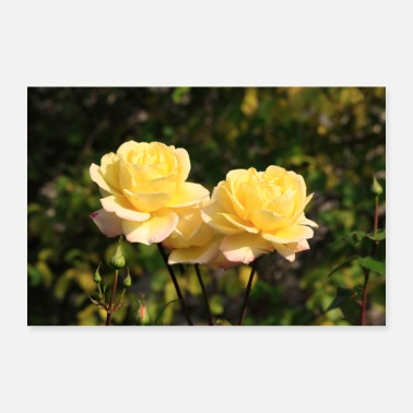 Yellow yellow rose - Poster 24 x 16 (60x40 cm)