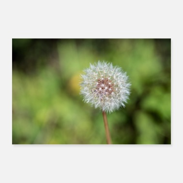 Against dandelion - Poster 24 x 16 (60x40 cm)