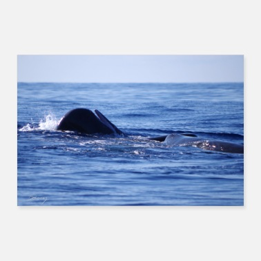 Open Sperm whale open with mouth - Poster 24 x 16 (60x40 cm)