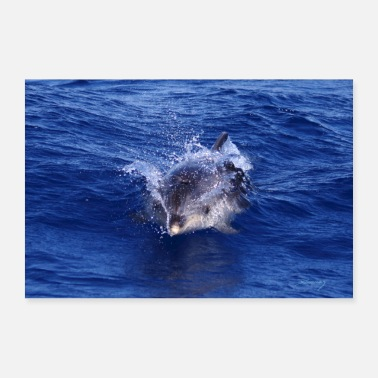 Brilliant Dolphin in the Azores - Poster 24 x 16 (60x40 cm)