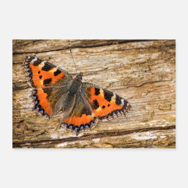 Small Butterfly Small Tortoiseshell - Poster 24 x 16 (60x40 cm)