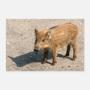 Boar Boarling Boar (Sus scrofa) - Poster