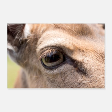 Wilderness Sweet roe eye as a wilderness wall decor Image - Gift - Poster