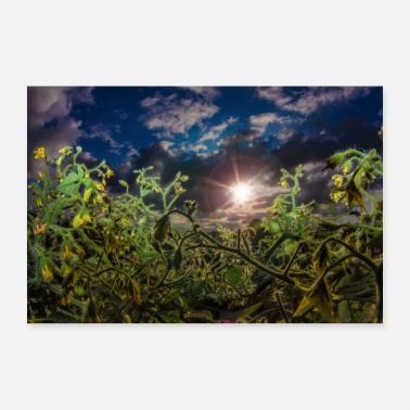 Tomato plant with sunshine sunshine and clouds - Poster