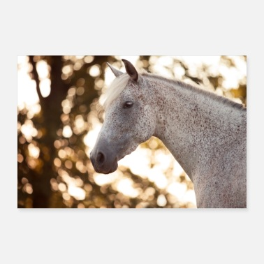 Mare Horse portrait of white horse in the evening light - Poster