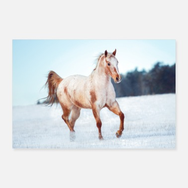 Trot Horse in winter wonderland at snow (Appaloosa) - Poster