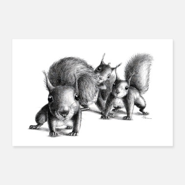 Three curious squirrel - Poster