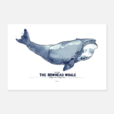 Grönlandsval (The Bowhead Whale) - Poster