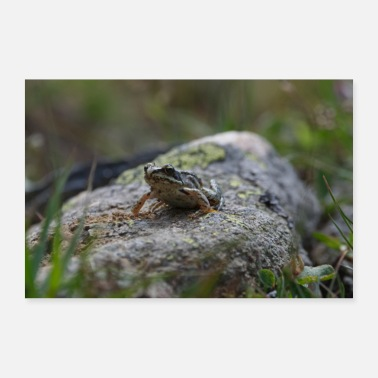 Outdoor Grenouille pierre photo prairie nature reptile amphibie - Poster