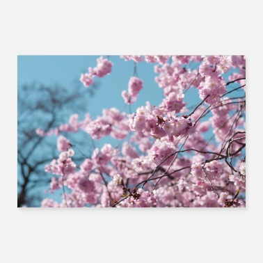 Cherry Cherry blossoms - Poster