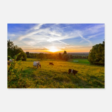 Kuhweide Cow pasture in the Black Forest - Poster