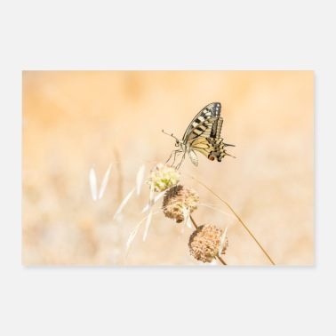 Delicate and beautiful knight butterfly in nature - Poster