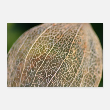 Winter Physalis im Winter - Poster 60x40 cm