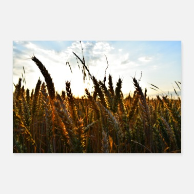 Wheat Wheat - poster - Poster
