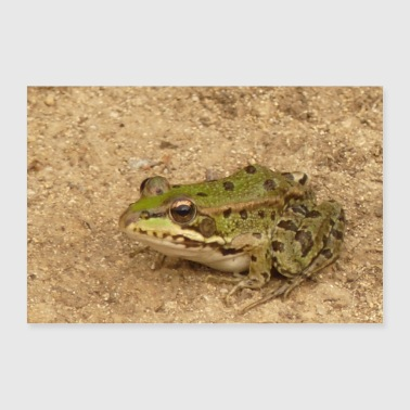 Sand frog - Poster 24 x 16 (60x40 cm)
