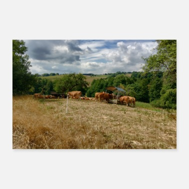 Udder Cows on a summer day - Poster