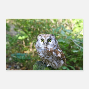 Bird Of Prey Owl bird of prey - Poster