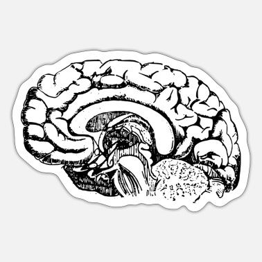 Anatomy Brain Anatomy - Sticker