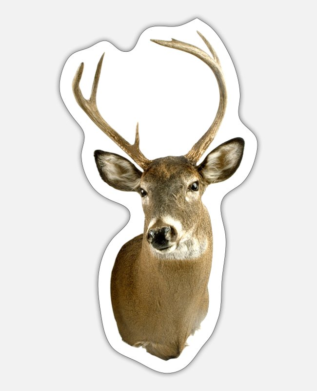 Stag Stickers - Stag - Sticker white mat