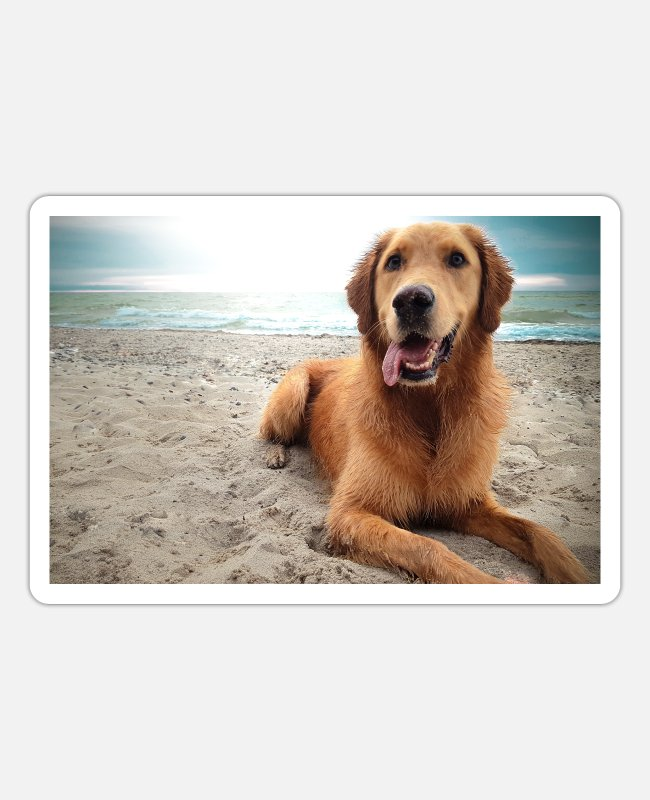 Nature Stickers - Dog on the beach | Yolo Artwork - Sticker white mat