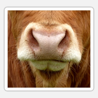 Nostrils Cow snout nose nostrils animal mouth cows - Sticker