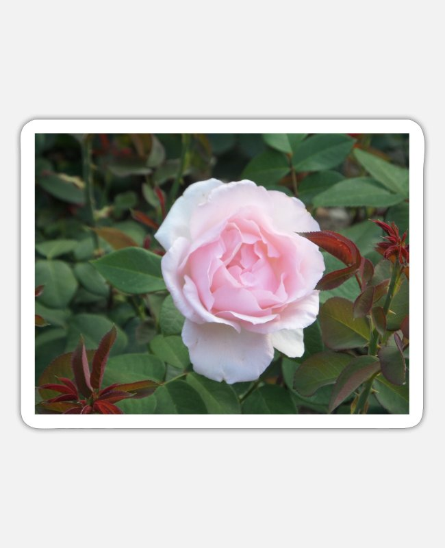 Nature Stickers - rose - Sticker white matte
