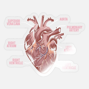 Anatomy Heart Anatomy - Anatomy of a Heart - Sticker